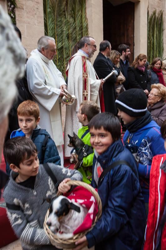 Animal blessings at Sant Antoni