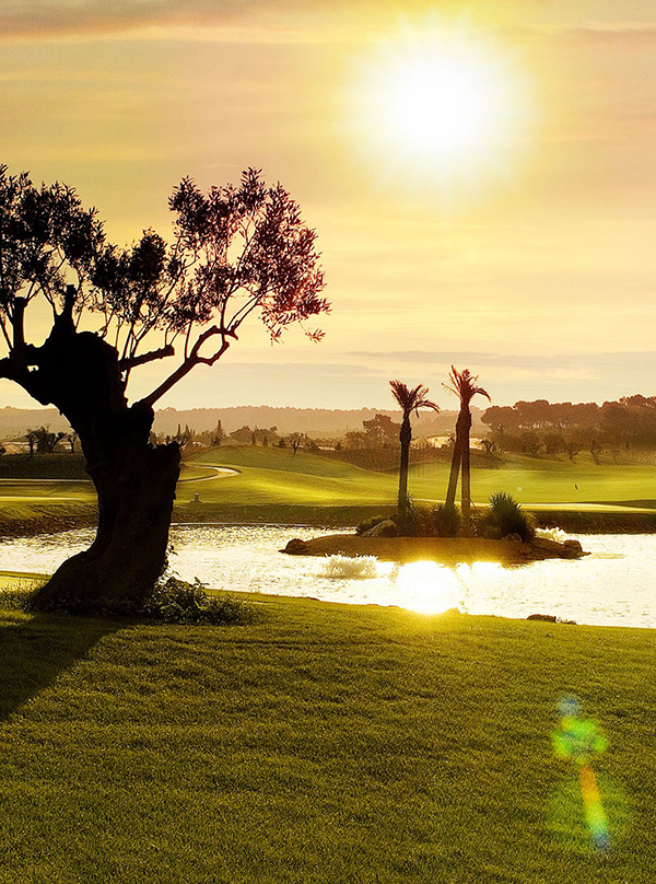 Olive trees, palms and vines surround the course. (Photo: Son Gual)