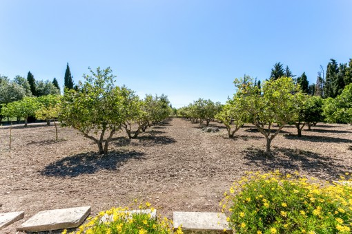 Lemontrees of the property