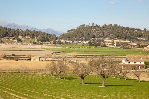 Views of the neighbouring fields