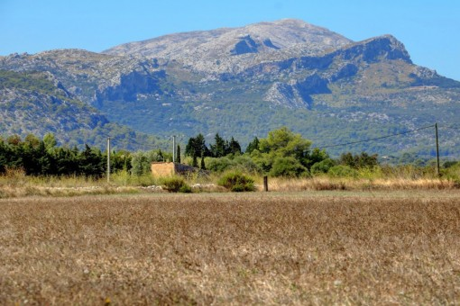 Building plot for sale in Pollensa to build a finca with pool