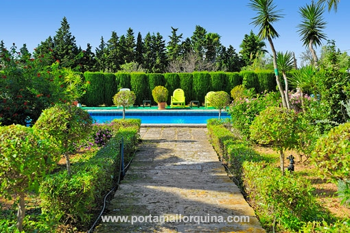 The swimming pool is surrounded by an oasis