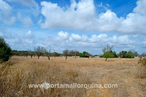 plot in Santanyi for sale