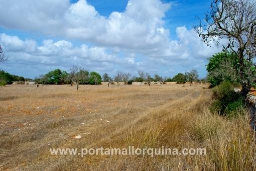 Plot near Santanyi