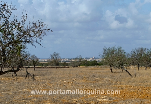 Building plot between Llombards and Ses Salines