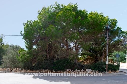 plot in Santanyi