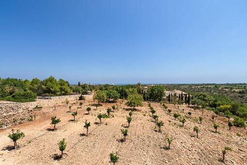 View of the plot with Mediterranean garden