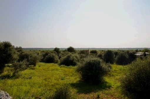 Rural building plot with project in walking distance to Santanyí