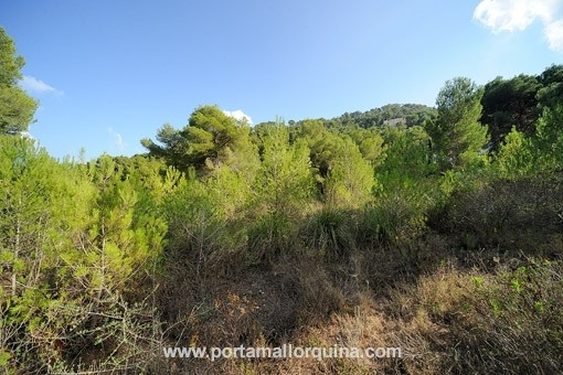 plot in Canyamel for sale