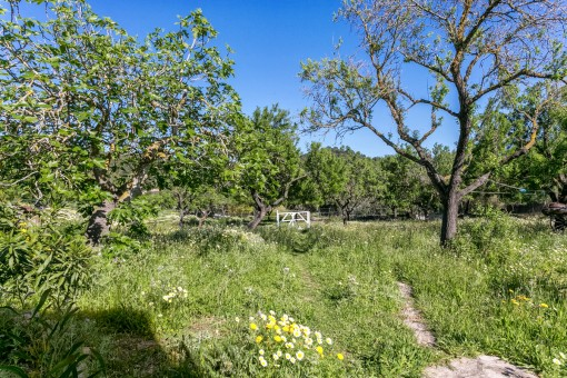 Alternative views of the garden
