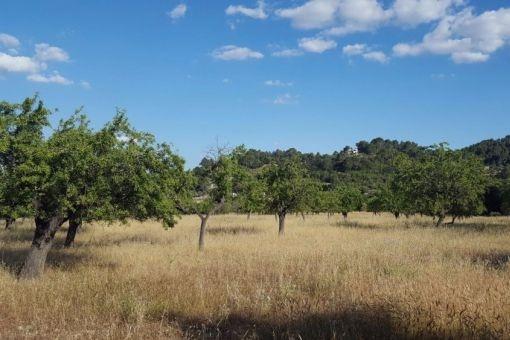 plot in Selva