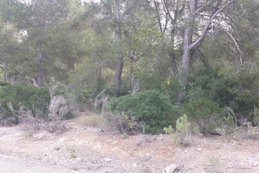 plot in Santa Ponsa