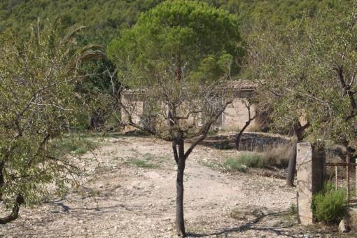plot in Capdella