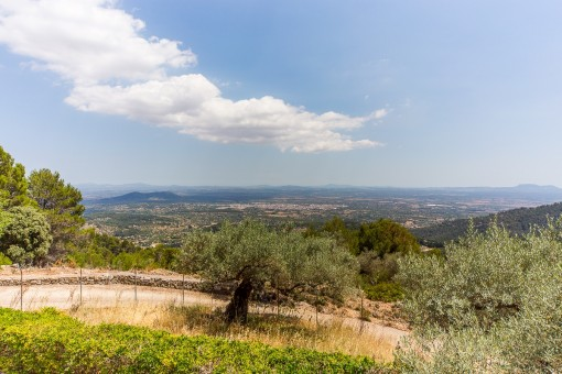 Panoramic views from Alcudia until Palma