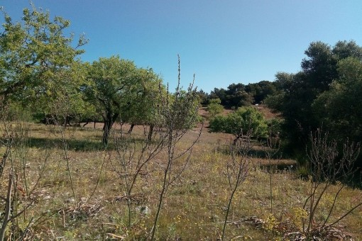 Large building plot with casita in Arta