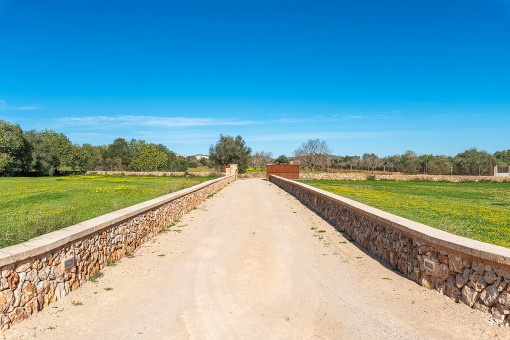 Driveway to the finca