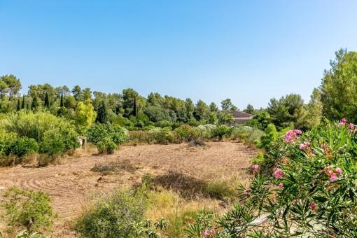 Spacious garden with fruit trees