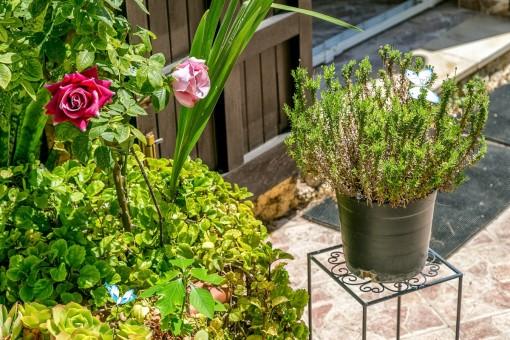 Details of the lovely garden