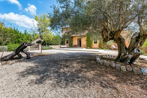 Front garden with olive trees