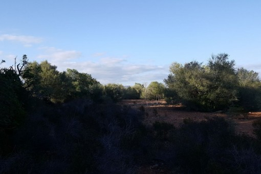 The plot is situated on the border to the natural park of Mondrago