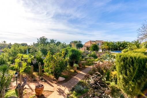 Mediterranean garden with many plants