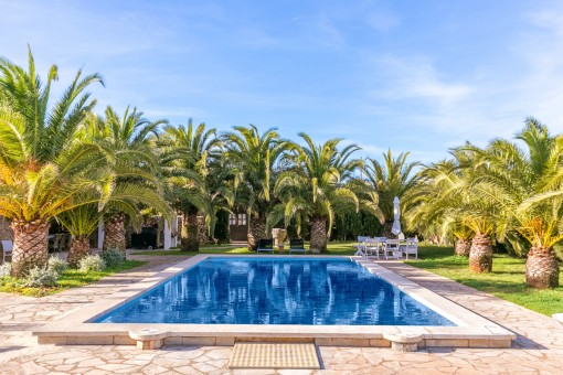 Idyllic pool area surrounded by palm trees