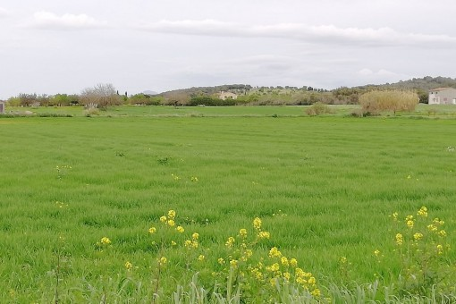 plot in Sant Joan