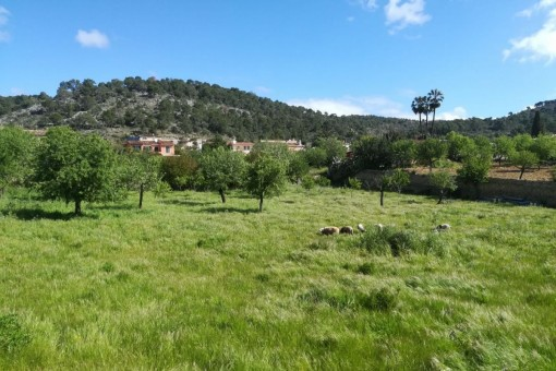 Beautiful building plot on the edge of Calvia for a large villa or 5 living units