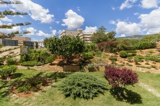 Views of the garden