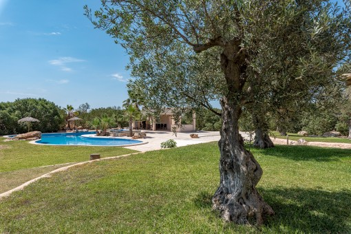 Lovely garden with olive trees
