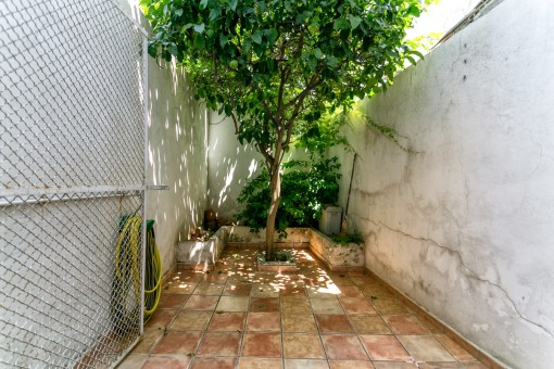 Small patio with lemon tree