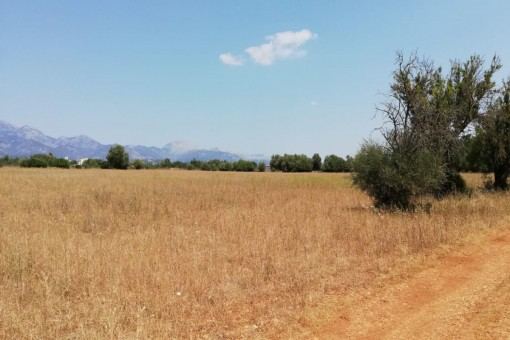 Plot of of approx. 47.000 sqm