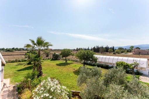 Mediterranean garden with palm trees