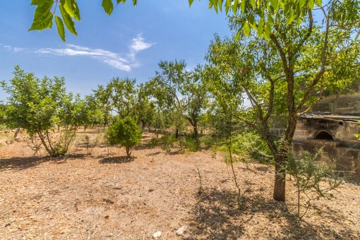 Lovely plot with fruit trees