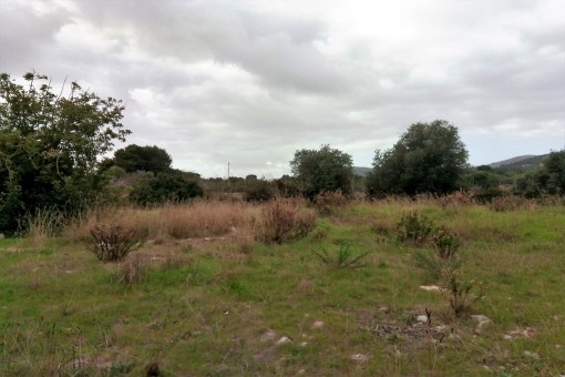 Alternative view of the plot