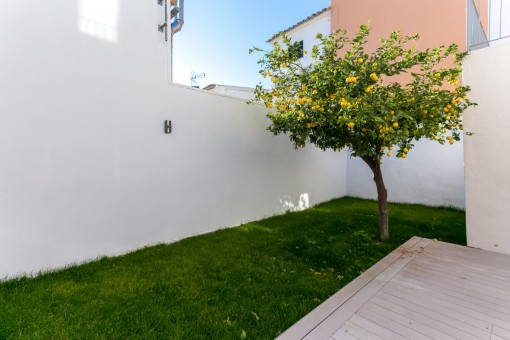 Private garden with lemon tree