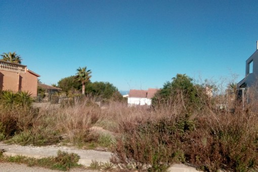 plot in Colonia de San Pedro for sale