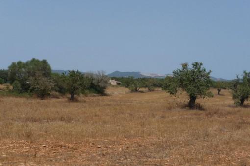 plot in Campos