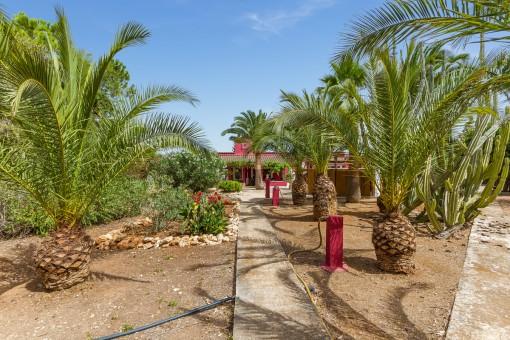 Beautiful palm tree garden