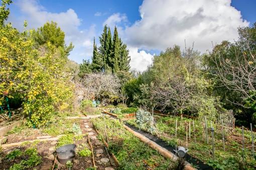 Lovely vegetable garden