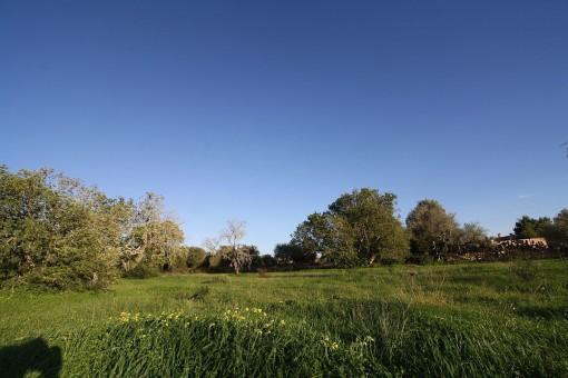 plot in Llucmajor