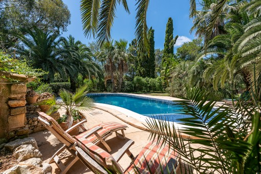 Dreamlike pool area surrounded by palm trees