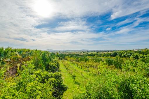 Dreamlike views over the green surroundings
