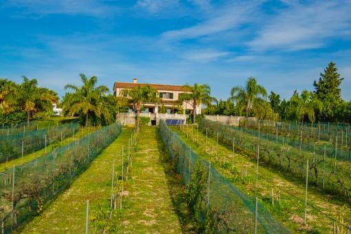 Wonderful own vineyard