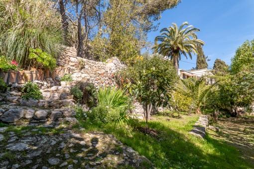 Mediterranean garden with various plants