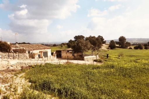 plot in Sineu