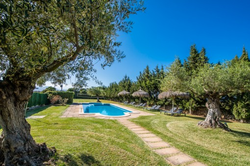 Pool with garden and olive trees