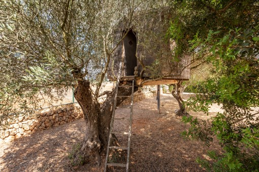 Garden with many olive trees